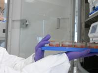 研究開発を支援する「ヒト臓器チップ」を開発するEmulate、1930万ドルの借入調達を実施