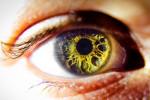 遺伝子治療による盲目治癒の可能性